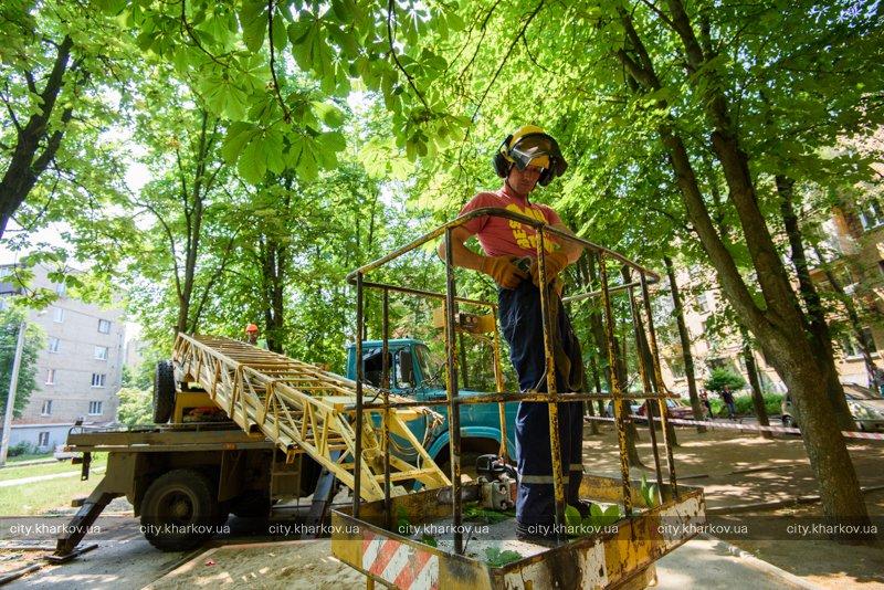 Коммунальщики проводят санитарную обрезку деревьев (ФОТО)