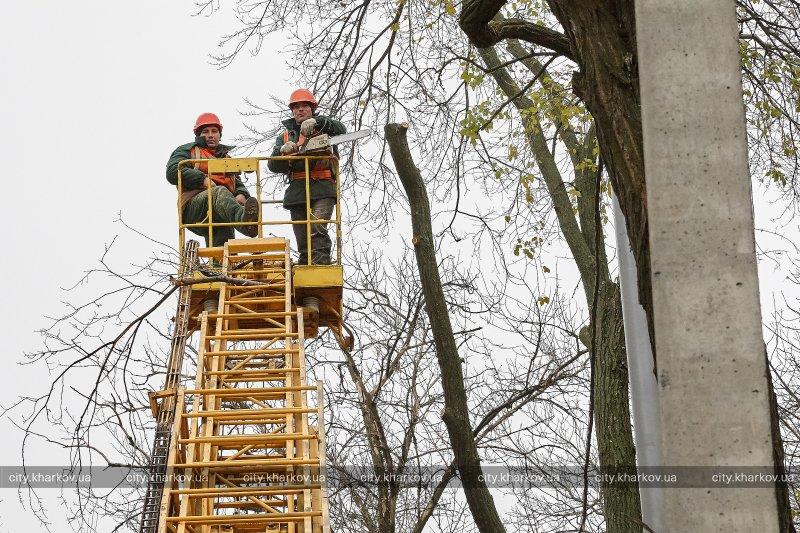 В городе обрезали аварийные деревья (ФОТО)