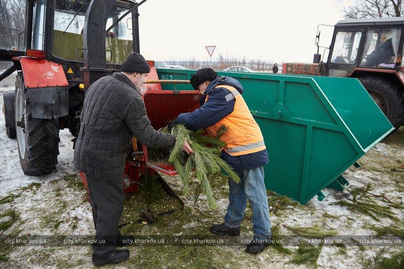 Коммунальщики утилизируют новогодние деревья (ФОТО)