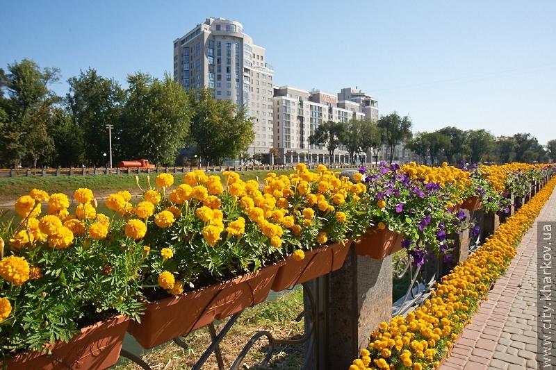 Голландцы впишут Харьков в Книгу рекордов Гиннесса
