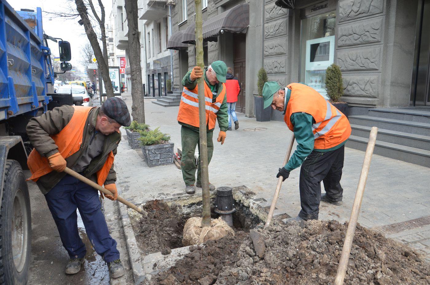 У Харкові почалася весняна висадка дерев