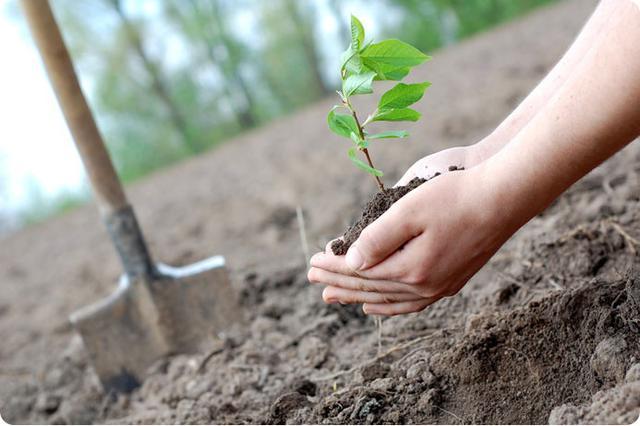 Цієї весни на вулиці Пушкінській посадять 60 дерев