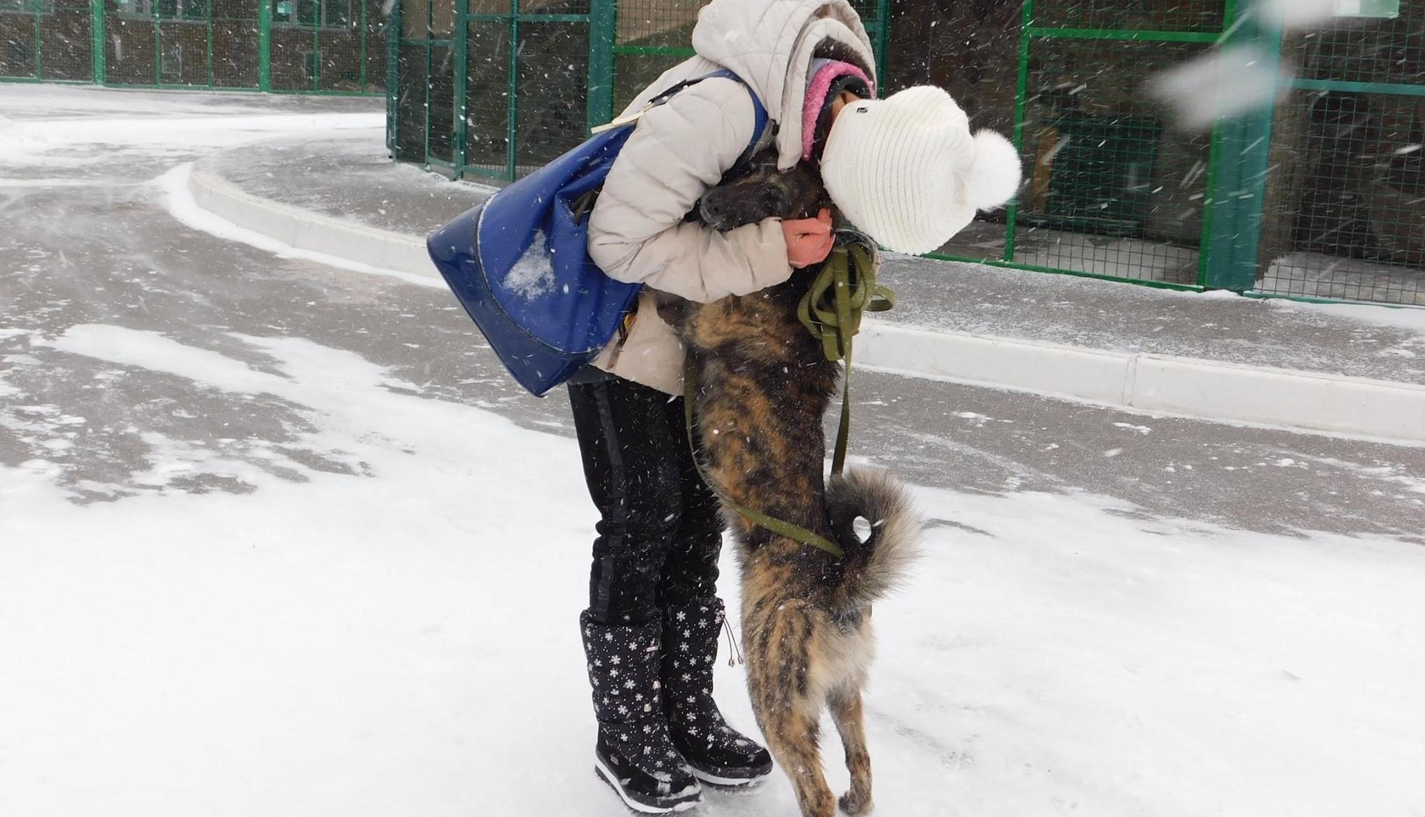 Понад 500 тварин у Харкові знайшли нових господарів