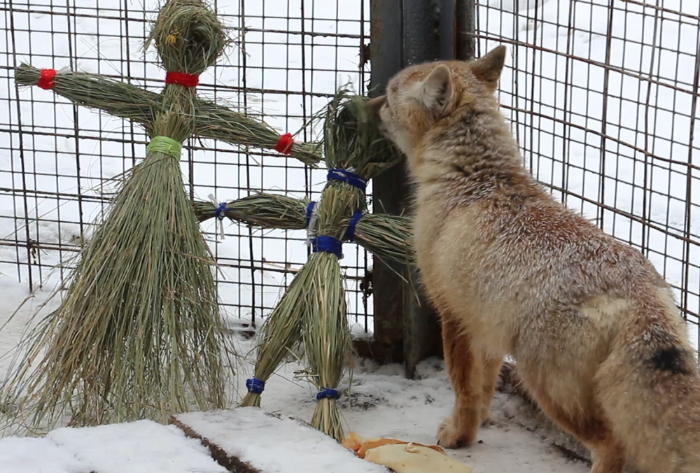 Мешканці зоопарку святкують Масляну