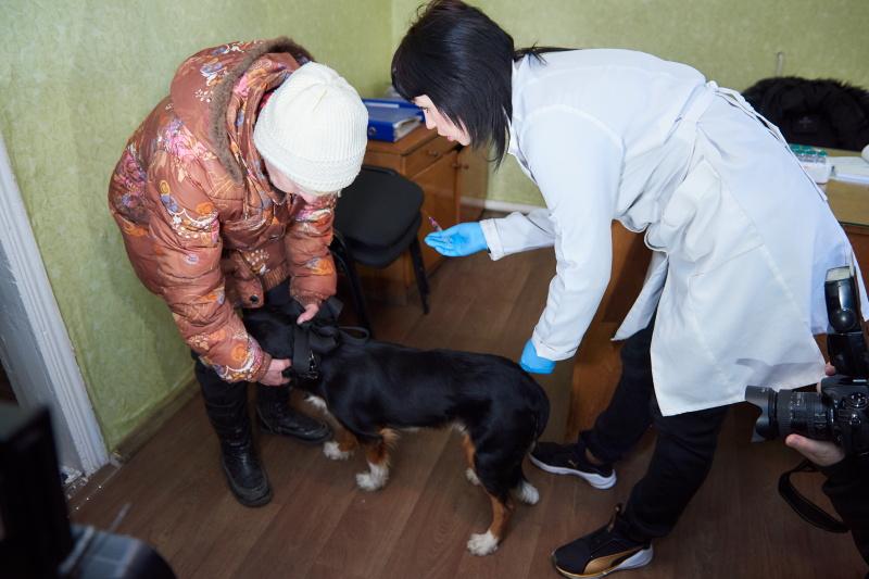 Харків'ян запрошують на вакцинацію домашніх вихованців проти сказу