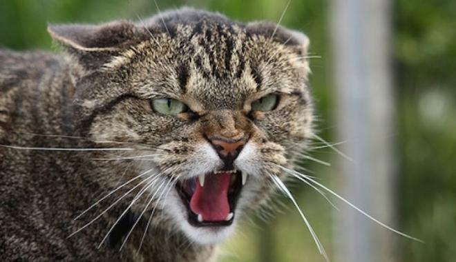 У частині Холодногірського району введено карантин через сказ кота