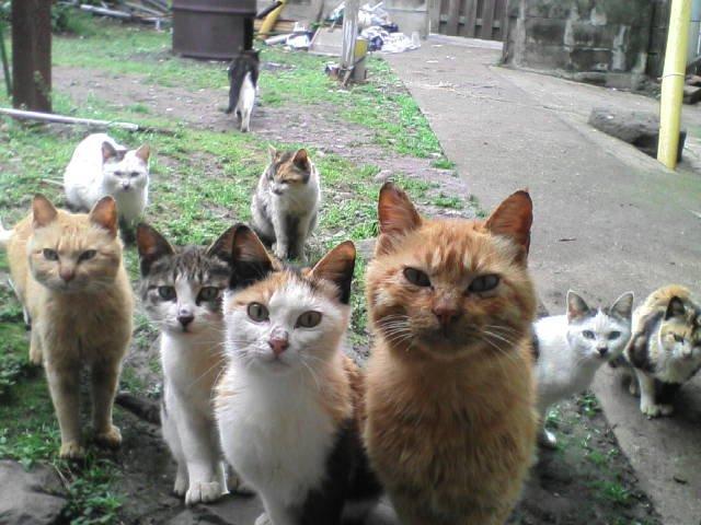 У місті почалася безкоштовна стерилізація бездомних кішок