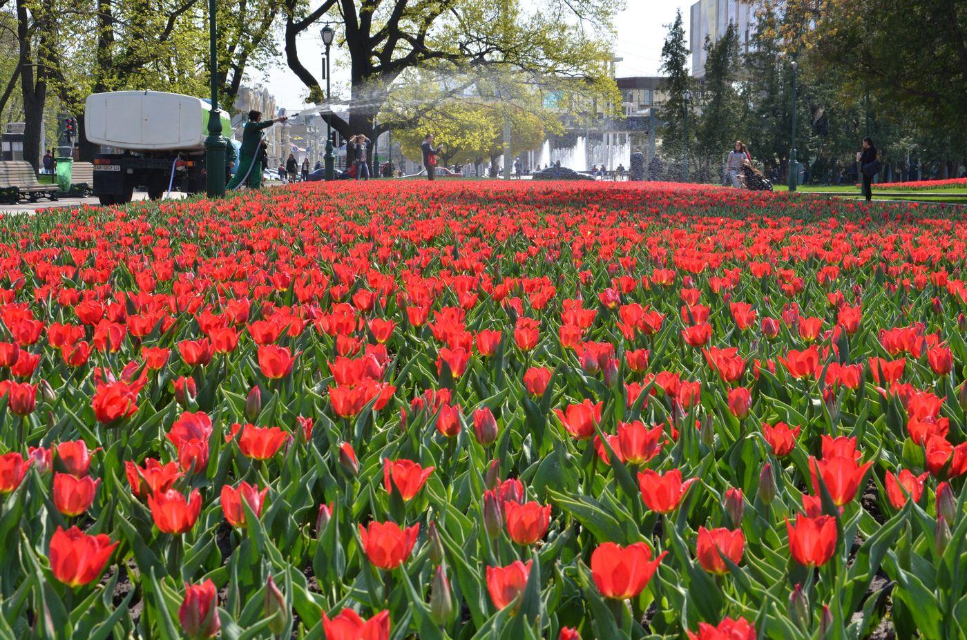 У Харкові посадять близько 2 мільйонів квітів
