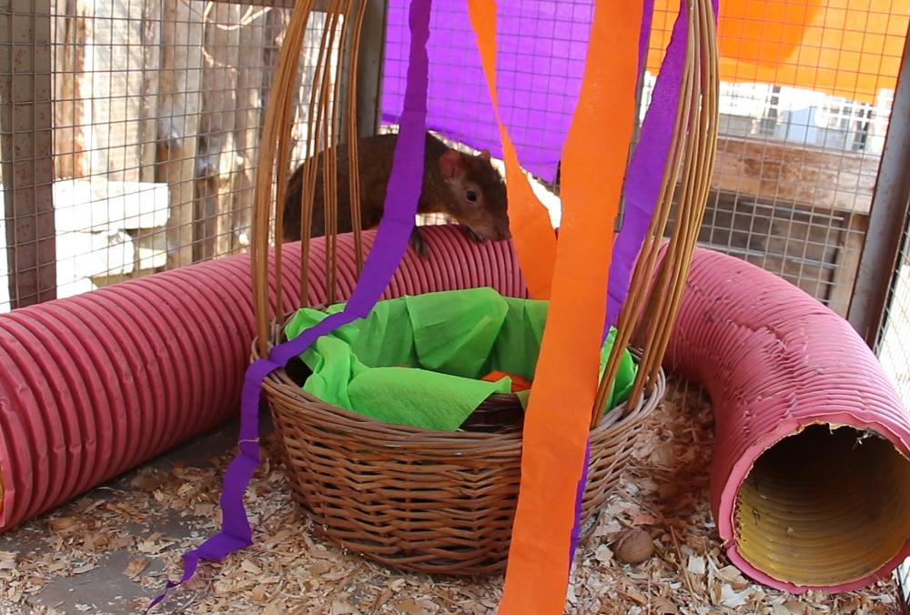 Мешканці Харківського зоопарку відзначили Великдень
